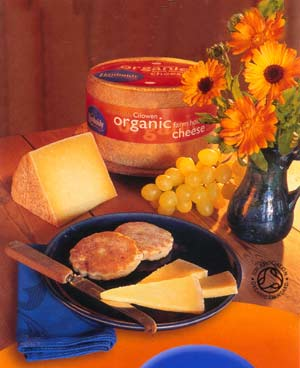 organic cheese - Welsh award winning cheese